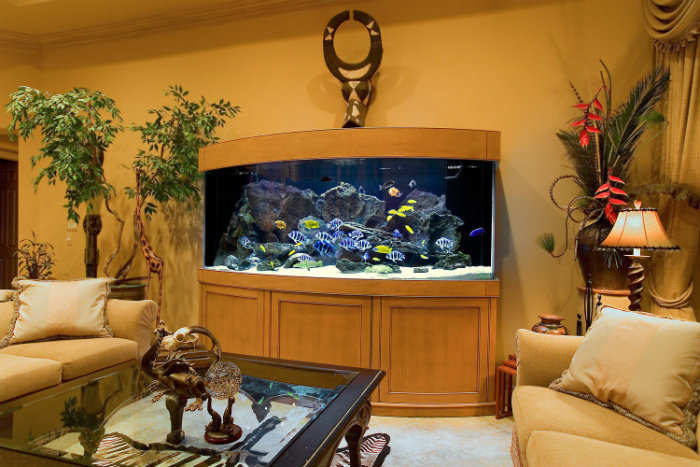 Home Aquarium The Best Size And Location Home And Decoration